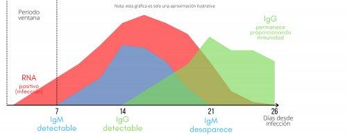 Grafica Anticuerpos IgG E IgM Laboratorio Analisis Clinicos Navarra Belen Perfecto